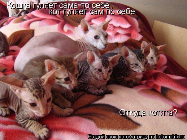 Котоматрица: Кошка гуляет сама по себе ,   кот гуляет сам по себе.  - Откуда котята?