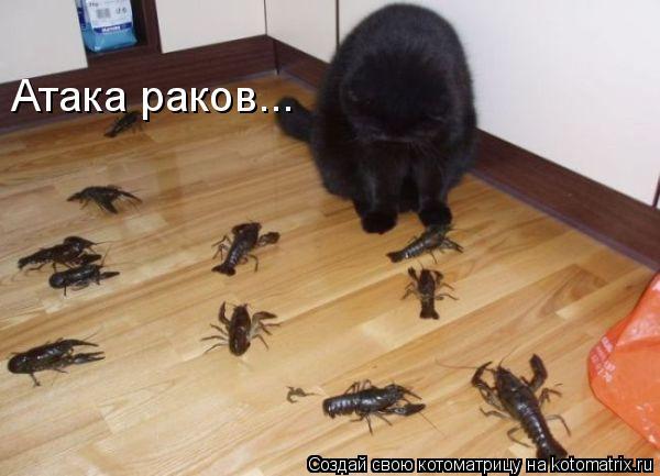 Котоматрица: Атака раков...