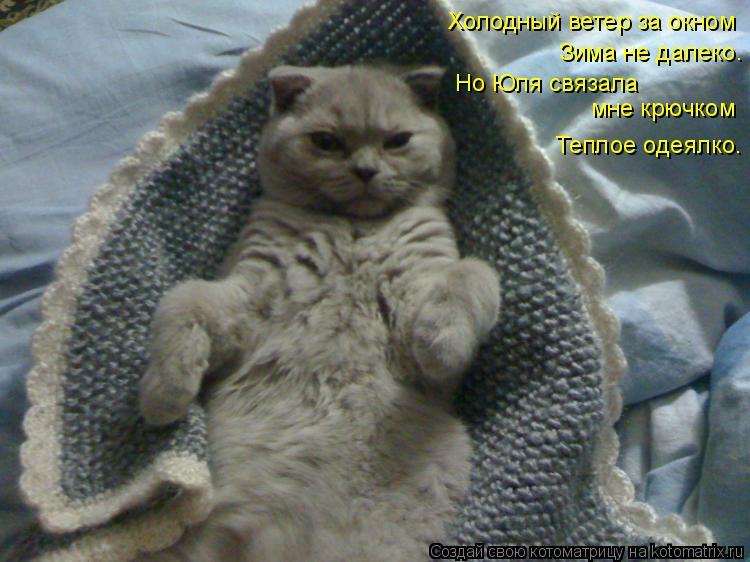Котоматрица: Холодный ветер за окном Зима не далеко. Но Юля связала  мне крючком Теплое одеялко.