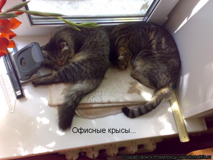 Котоматрица: Офисные крысы...