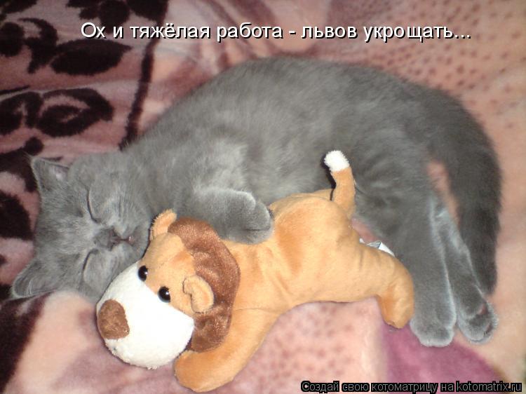 Котоматрица: Ох и тяжёлая работа - львов укрощать...