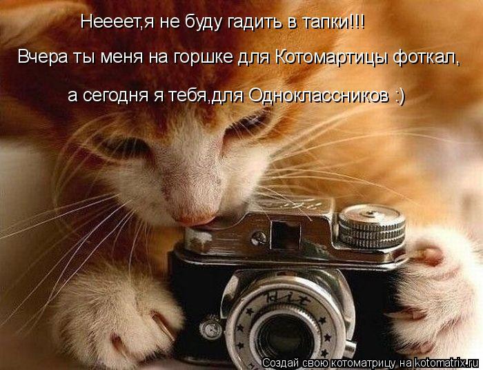 Котоматрица: Неееет,я не буду гадить в тапки!!! а сегодня я тебя,для Одноклассников :) Вчера ты меня на горшке для Котомартицы фоткал,