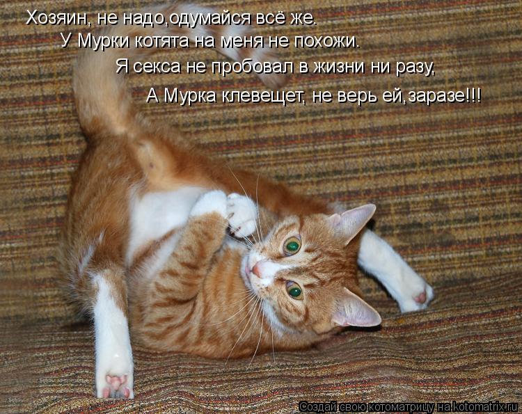 Котоматрица: Хозяин, не надо,одумайся всё же. У Мурки котята на меня не похожи. Я секса не пробовал в жизни ни разу, А Мурка клевещет, не верь ей,заразе!!!