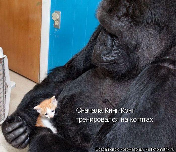 Котоматрица: Сначала Кинг-Конг тренировался на котятах