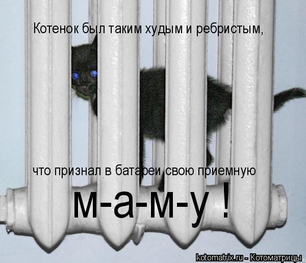 Котоматрица: Котенок был таким худым и ребристым, что признал в батареи свою приемную м-а-м-у !