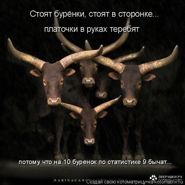 Котоматрица: платочки в руках теребят Стоят бурёнки, стоят в сторонке... потому что на 10 буренок по статистике 9 бычат...