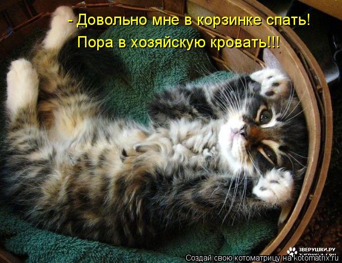 Котоматрица: - Довольно мне в корзинке спать! Пора в хозяйскую кровать!!!