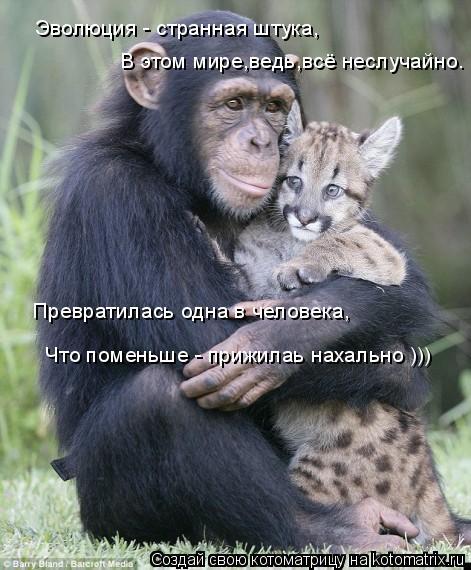 Котоматрица: Эволюция - странная штука, В этом мире,ведь,всё неслучайно. Превратилась одна в человека, Что поменьше - прижилаь нахально )))