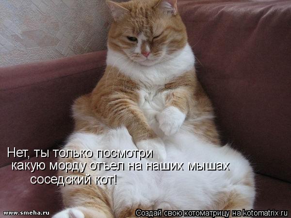 Котоматрица: Нет, ты только посмотри  какую морду отъел на наших мышах     соседский кот!