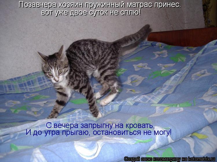 Котоматрица: Позавчера хозяин пружинный матрас принес. вот уже двое суток не сплю! С вечера запрыгну на кровать, И до утра прыгаю, остановиться не могу!