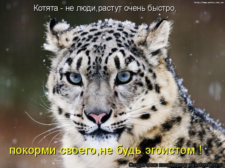 Котоматрица: покорми своего,не будь эгоистом ! Котята - не люди,растут очень быстро,