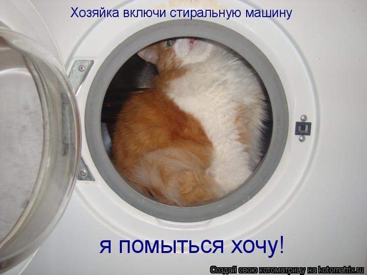 Котоматрица: Хозяйка включи стиральную машину  я помыться хочу!