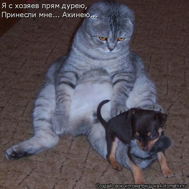 Котоматрица: Я с хозяев прям дурею, Принесли мне... Ахинею...