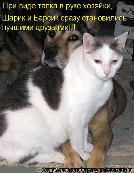 Котоматрица: При виде тапка в руке хозяйки, Шарик и Барсик сразу становились лучшими друзьями!!!