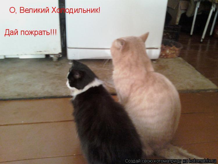 Котоматрица: О, Великий Холодильник!  Дай пожрать!!!