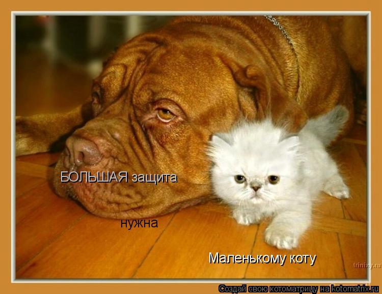 Котоматрица: Маленькому коту нужна БОЛЬШАЯ защита