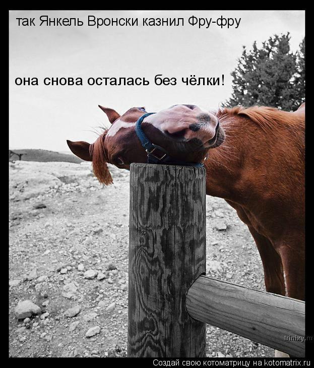 Котоматрица: так Янкель Вронски казнил Фру-фру она снова осталась без чёлки!