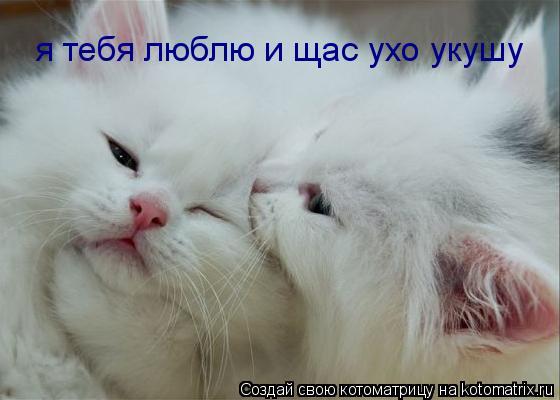 Котоматрица: я тебя люблю и щас ухо укушу