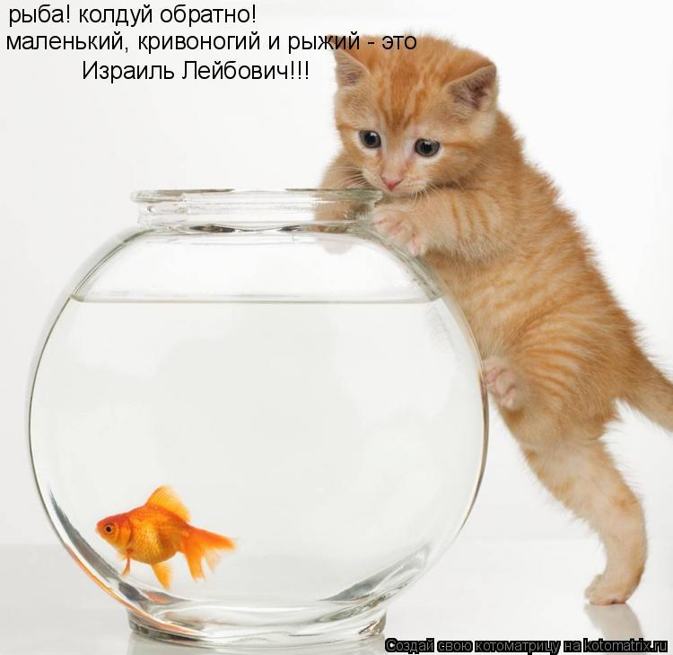 Котоматрица: рыба! колдуй обратно! маленький, кривоногий и рыжий - это Израиль Лейбович!!!