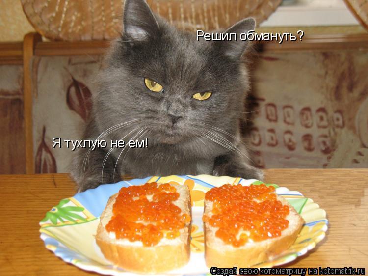 Котоматрица: Решил обмануть? Я тухлую не ем!
