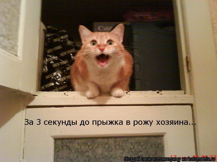 Котоматрица: За 3 секунды до прыжка в рожу хозяина...