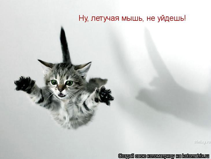 Котоматрица: Ну, летучая мышь, не уйдешь!