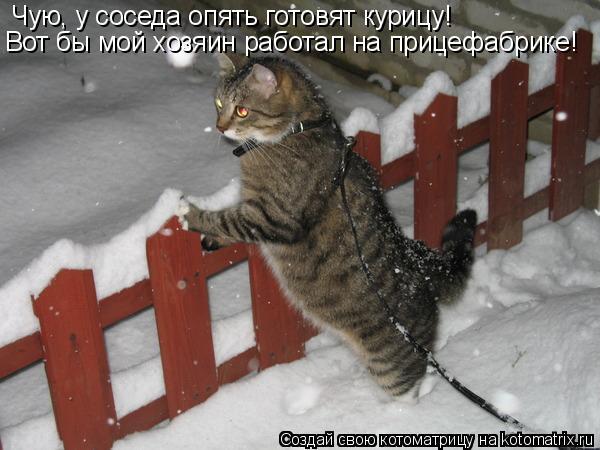Котоматрица: Чую, у соседа опять готовят курицу! Вот бы мой хозяин работал на прицефабрике!