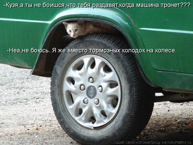 Котоматрица: -Кузя,а ты не боишся,что тебя раздавят,когда машина тронет??? -Неа,не боюсь..Я же вместо тормозных колодок на колесе.