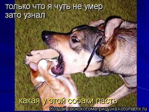 Котоматрица: только что я чуть не умер зато узнал какая у этой собаки пасть