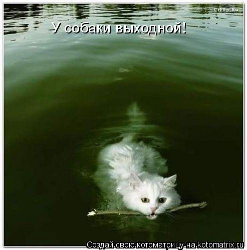 Котоматрица: У собаки выходной!