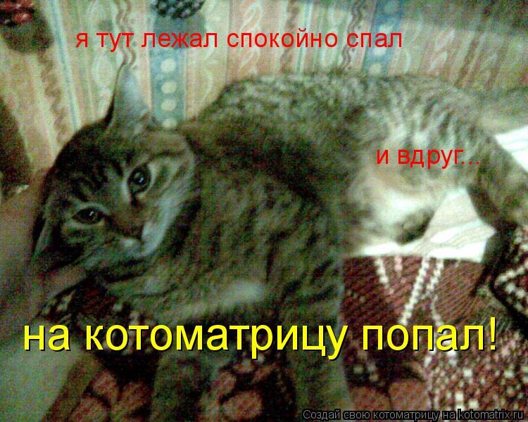 Котоматрица: я тут лежал спокойно спал и вдруг... на котоматрицу попал!