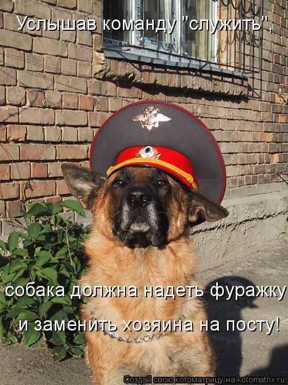 """Котоматрица: Услышав команду """"служить"""",  собака должна надеть фуражку и заменить хозяина на посту!"""