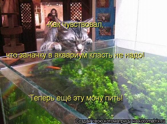 Котоматрица: -Как чувствовал, -Как чувствовал, Теперь ещё эту мочу пить! что заначку в аквариум класть не надо!