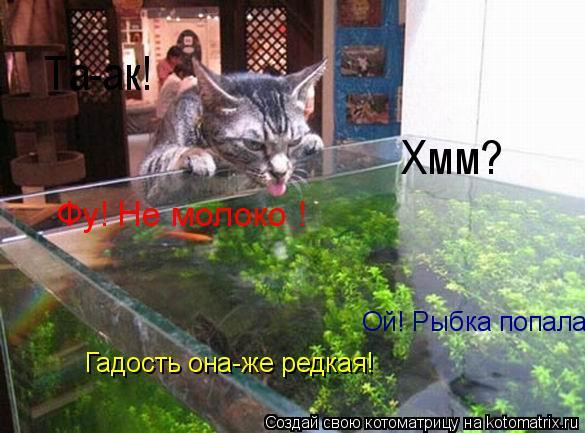 Котоматрица: Та-ак! Хмм? Фу! Не молоко ! Ой! Рыбка попала! Гадость она-же редкая!