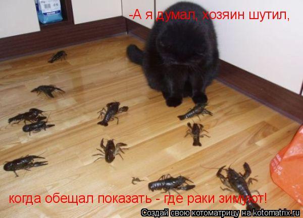 Котоматрица: -А я думал, хозяин шутил, когда обещал показать - где раки зимуют!