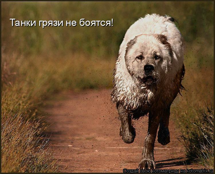 Котоматрица: Танки грязи не боятся!