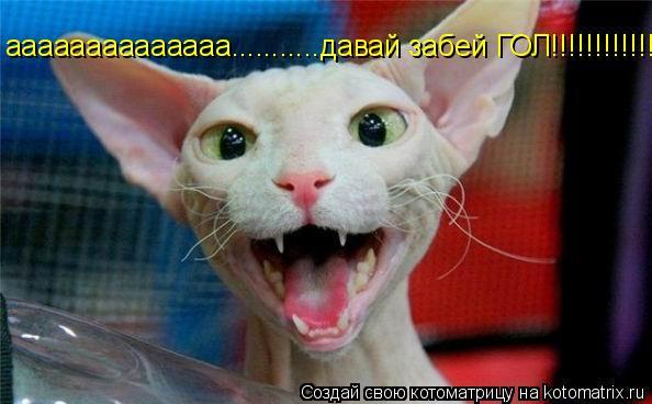 Котоматрица: аааааааааааааа...........давай забей ГОЛ!!!!!!!!!!!!
