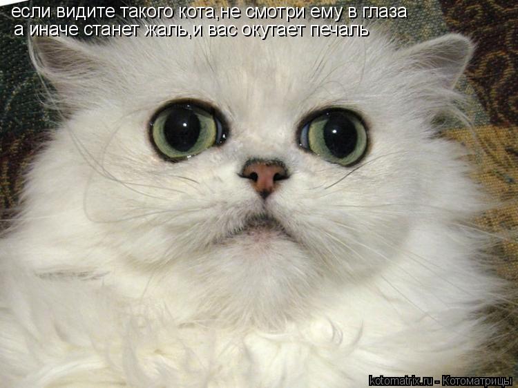 Котоматрица: если видите такого кота,не смотри ему в глаза а иначе станет жаль,и вас окутает печаль