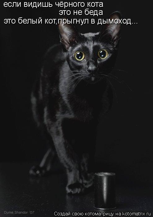 Котоматрица: если видишь чёрного кота это не беда это белый кот,прыгнул в дымоход...