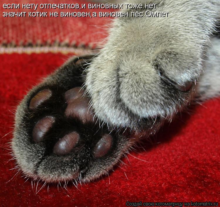 Котоматрица: если нету отпечатков,и виновных тоже нет значит котик не виновен,а виновен пёс Омлет
