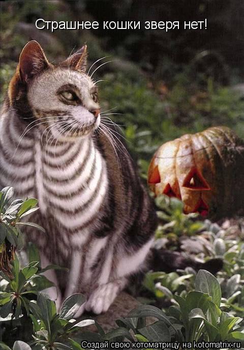 Котоматрица: Страшнее кошки зверя нет!