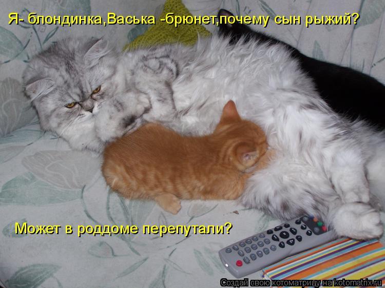 Котоматрица: Я- блондинка,Васька -брюнет,почему сын рыжий? Может в роддоме перепутали?
