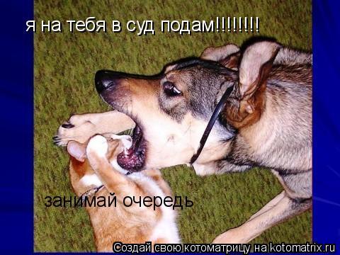 Котоматрица: я на тебя в суд подам!!!!!!!! занимай очередь