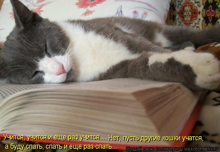 Котоматрица: Учится, учится и еще раз учится... Нет, пусть другие кошки учатся, а Учится, учится и еще раз учится...   Нет, пусть другие кошки учатся,  а буду с