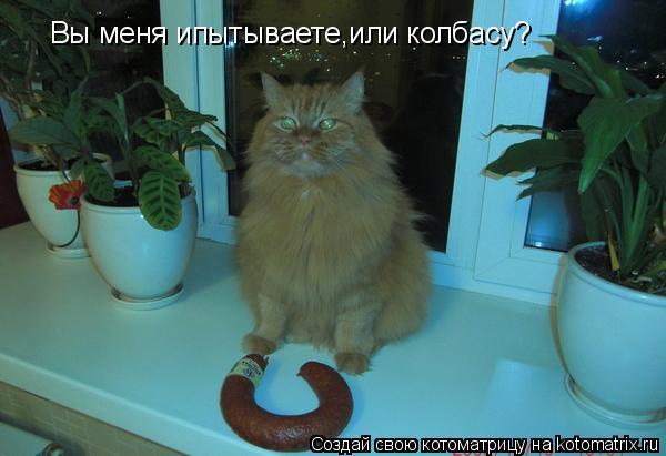 Котоматрица: Вы меня ипытываете,или колбасу?