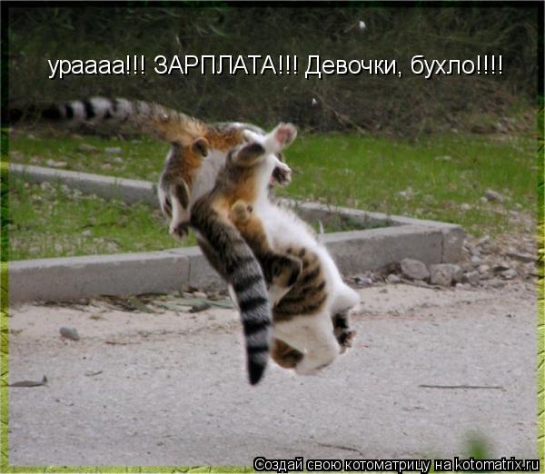 Котоматрица: ураааа!!! ЗАРПЛАТА!!! Девочки, бухло!!!!