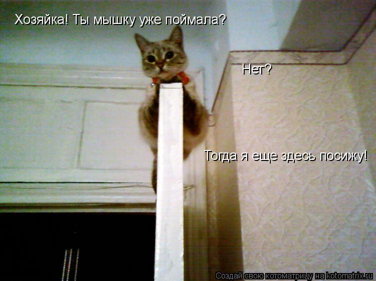 Котоматрица: Хозяйка! Ты мышку уже поймала?  Нет? Тогда я еще здесь посижу!