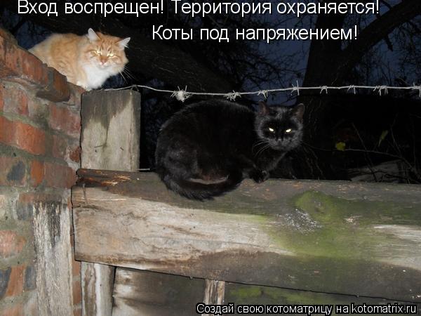 Котоматрица: Вход воспрещен! Территория охраняется! Коты под напряжением!