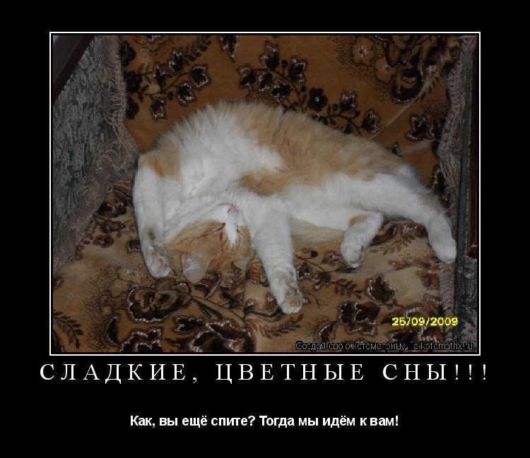 Котоматрица: Сладкие, цветные сны!!!  Как, вы ещё спите? Тогда мы идём к вам!