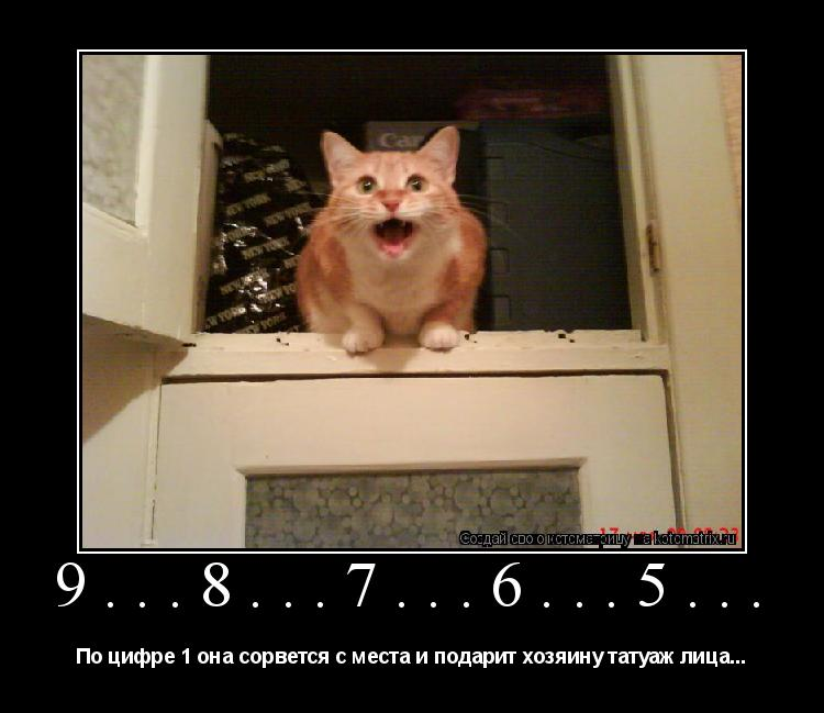 Котоматрица: 9...8...7...6...5... По цифре 1 она сорвется с места и подарит хозяину татуаж лица...